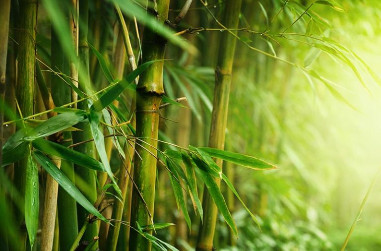 Feng Shui Elements – Wood Element
