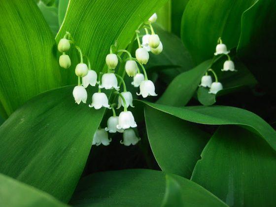spring flowe